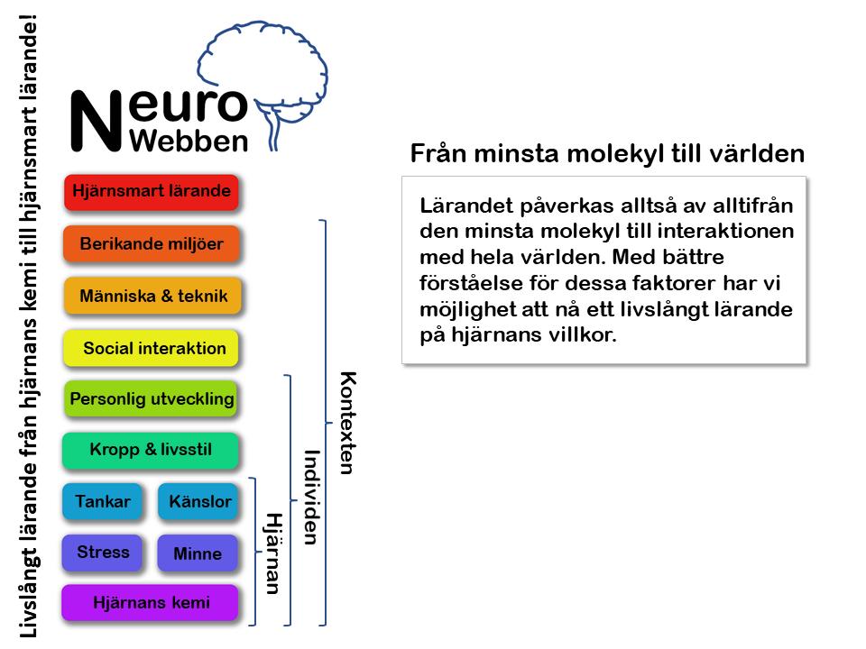 NeuroWebben info (5)